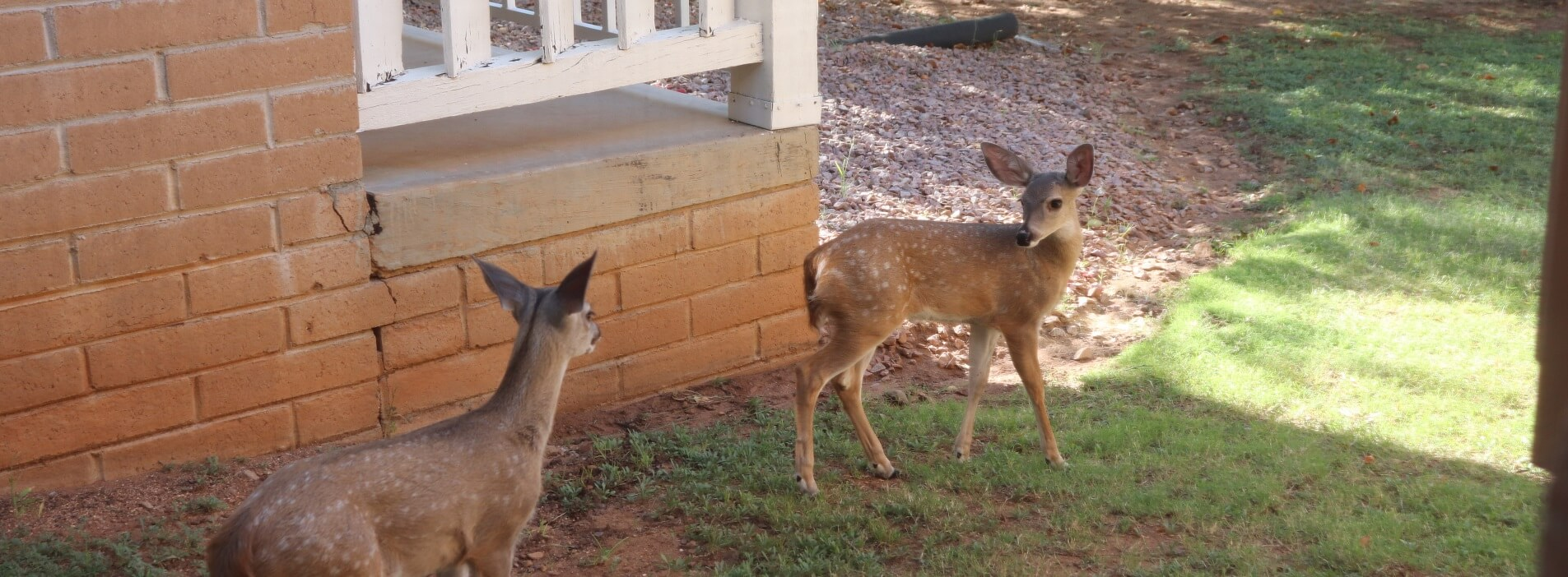 2021 09 26 twin fawns